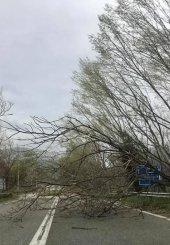 Ισχυροί άνεμοι και καταιγίδες έπληξαν την Κυριακή τον δήμο Τοπείρου Ξάνθης