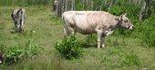 Συνολικά 690 κτηνοτρόφοι εντάσσονται στο πρόγραμμα Διατήρησης Αυτόχθονων Φυλών