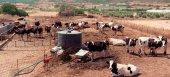 Καθορίστηκε το ποσό της ενίσχυσης για αγελαδινό και πρόβειο γάλα που παράγεται στα νησιά του Αιγαίου
