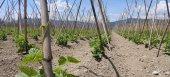 Ποια είναι τα είδη των βρώσιμων οσπρίων που εξασφαλίζουν συνδεδεμένη ενίσχυση