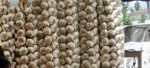 Αποζημίωση των παραγωγών σκόρδου Βύσσας ζητά ο Μαριάς με ερώτηση προς την Κομισιόν