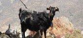 Στα 100 κιλά γάλα ανά ζώο μειώνεται από το 2017 το ελάχιστο όριο για τη συνδεδεμένη ενίσχυση στα αιγοπρόβατα