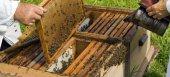 Δηλώσεις για ζημιές σε κυψέλες στον Έβρο