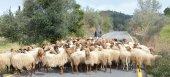 Οσμή σκανδάλου στο Ρέθυμνο με κτηνοτροφικές επιδοτήσεις - έρευνα διεξάγει ο ΟΠΕΚΕΠΕ