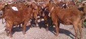 Νέες πληρωμές για βιολογικά και άλλα αγροπεριβαλλοντικά μέτρα