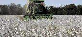Νέα κοροϊδία για σιτοπαραγωγούς και βαμβακοπαραγωγούς του Έβρου, καταγγέλλει η Ομοσπονδία Αγροτικών Συλλόγων