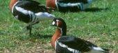 Από 26 Αυγούστου αιτήσεις για την δράση προστασίας άγριας ορνιθοπανίδας