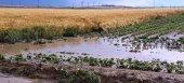 Επίκαιρη ερώτηση για τις αποζημιώσεις των αγροτών του Παγγαίου