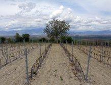 Σε απόγνωση μικρο-οινοποιός από τις Σέρρες μετά την επιβολή του ΕΦΚ στο κρασί
