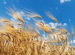 Αύξηση αγροτικών εισοδημάτων τον Ιούνιο κυρίως λόγω φυτικής παραγωγής και μειωμένων εξόδων