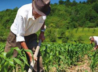 Μείωση φτώχειας και αύξηση βιοκαλλιεργειών δείχνουν τα επικαιροποιημένα στοιχεία της ΚΑΠ