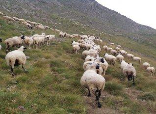 Πληρώθηκαν οι δικαιούχοι βιολογικής κτηνοτροφίας σε Δυτική Ελλάδα, Πελοπόννησο και Ιόνιο