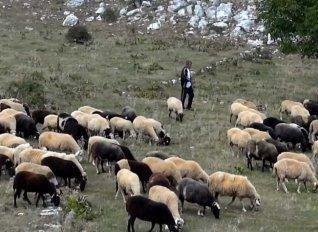 Κρατικές ενισχύσεις de minimis και για τους κτηνοτρόφους του Ρεθύμνου ζητά η Αντιπεριφερειάρχης