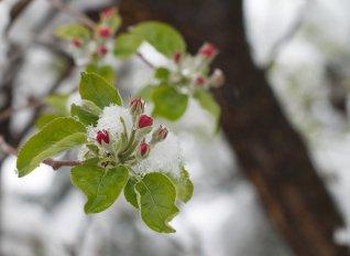 Πρωινός παγετός έπληξε το Σάββατο τα δέντρα σε Αγιά και Καλαμάκι