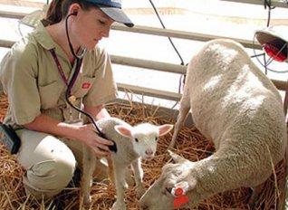 «Καμπανάκι» για ιδιωτικοποίηση της Δημόσιας Κτηνιατρικής Υπηρεσίας από ΠΕΓΔΥ και ΠΟΓΕΔΥ