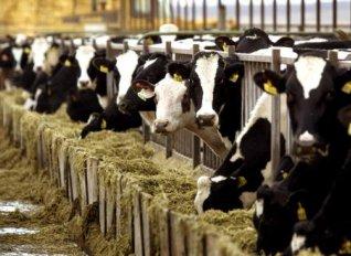 Στην Κύπρο καταγράφτηκε η μεγαλύτερη αύξηση παραγωγής γάλακτος