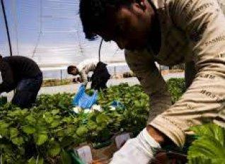 Στην «Εργάνη» θα καταχωρούνται προσεχώς και οι αγρεργάτες που απασχολούνται με εργόσημο