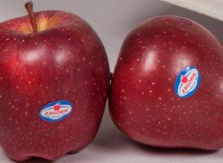 Ολοκληρώθηκε η περίοδος εμπορίας για τα μήλα Zagorin - Τον Σεπτέμβριο η νέα σοδειά στην αγορά