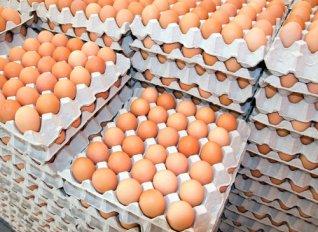 Ανιχνεύτηκε σαλμονέλα, μετά από έλεγχο υπηρεσιών του ΥΠΑΑΤ, σε μονάδα αυγοπαραγωγής στην Αυλώνα