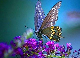 Υπό εξαφάνιση το 5% των ειδών των πεταλούδων της Μεσογείου