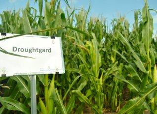 Εγκρίθηκαν δέκα νέες άδειες για γενετικά τροποποιημένους σπόρους από την Κομισιόν