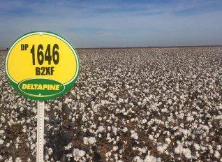 Ευθυμιάδης και Ανδριώτης έχουν συμβόλαια για τη διάθεση των προϊόντων της Monsanto και για το 2019