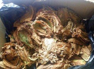 Αισιοδοξία για την φετινή παραγωγή καπνού μπασμά