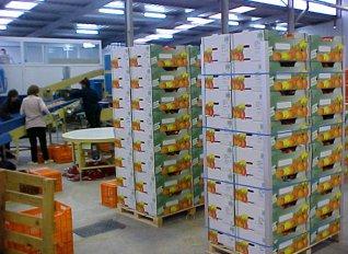Ένας από τους σημαντικότερους προορισμούς των ελληνικών προϊόντων είναι η Γερμανία