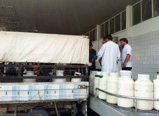 Eντατικούς έλεγχους στο γάλα ζητούν οι κτηνοτρόφοι της Θεσσαλίας