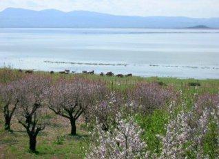 Παρέμβαση της ΕΑΣ Βόλου για τις παρακάρλιες εκτάσεις