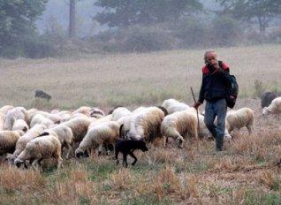 """""""Γερή μπάζα"""" για τους ζωοκλέφτες σε χωριό του Ηρακλείου"""