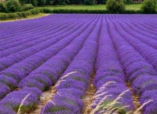 Φαρμακευτικά φυτά μέσω Interreg