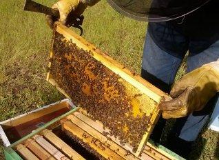 Ενισχύσεις  ύψους 767.486 ευρώ για τα Κέντρα Μελισσοκομίας έτους 2017