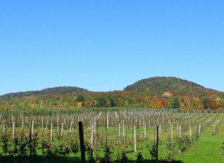 Συνδεδεμένη ενίσχυση δικαιούνται από φέτος τα μήλα και οι καρποί με κέλυφος