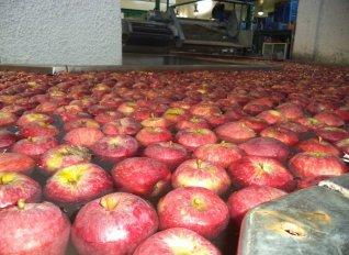 Στην Πέλλα παράγονται τα φρούτα, αλλά η υπεραξία των εξαγωγών πάει... Πήλιο, Τουρκία και αλλού