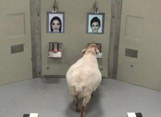 Κι όμως, τα πρόβατα έχουν φωτογραφική μνήμη