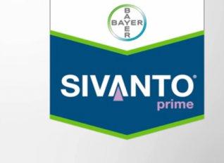 Νέα κυκλοφορία από την Bayer: Το φυσικής προέλευσης εντομοκτόνο SIVANTO Prime