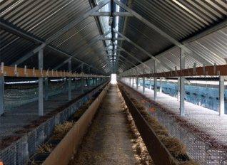 Αιτήσεις για άδειες διατήρησης στάβλων έως 4 Δεκεμβρίου - εγκύκλιος με διευκρινίσεις