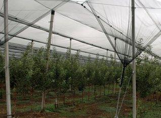 Περίπου 100 στρέμματα θερμοκηπιακών καλλιεργειών κατέστρεψε η κακοκαιρία στα Χανιά