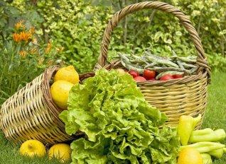 Έντονη αντίδραση βιοκαλλιεργητών σε ανακριβή δημοσιεύματα για τους ελέγχους των βιολογικών προϊόντων