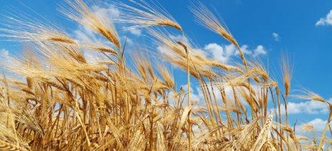 Ξεκίνησαν αιτήσεις για πριμ ασυγκόμιστων καλλιεργειών
