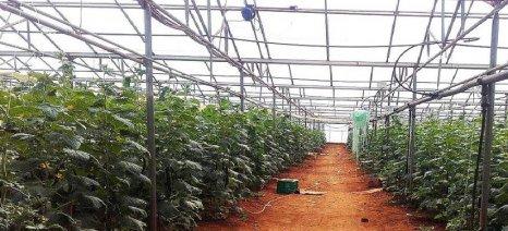 Αγρότες των Φιλιατρών έπιασαν επ' αυτοφώρω τους κλέφτες της παραγωγής τους