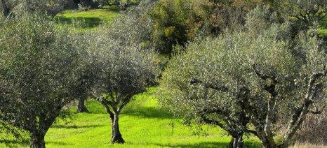 Οικονομική ενίσχυση των ελαιοπαραγωγών ζητά ο Δήμος Αλμυρού