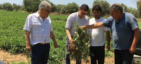 Εξώδικο στον ΕΛΓΑ από την Ομάδα Παραγωγών Αμαλιάδας για τις καθυστερήσεις των εκτιμητών