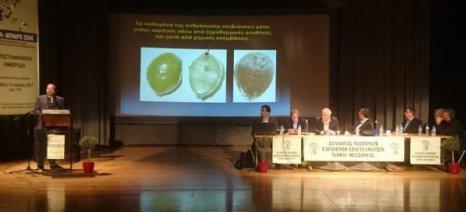 Δάκος και μυκητολογικές ασθένειες αποδεκάτισαν την παραγωγή ελαιολάδου