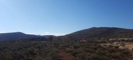 Μεγάλη αγροτουριστική επένδυση στη Χίο με επίκεντρο ελαιώνες στο Εμπορειό