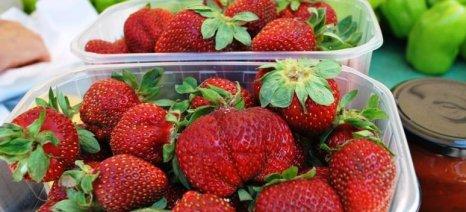 Ρεκόρ όλων των εποχών σημειώνουν οι εξαγωγές φράουλας ενώ υστερούν των θερινών φρούτων