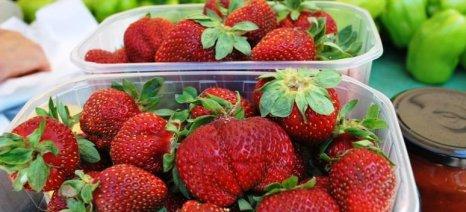 Συνεχίζεται το ρεκόρ εξαγωγών φράουλας ενώ ανακάμπτουν και τα θερινά φρούτα