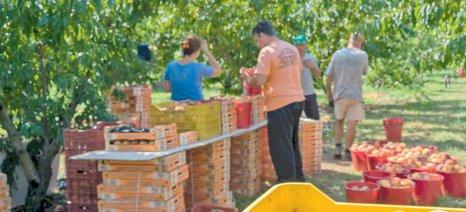 «Ανταγωνισμός & Αγροδιατροφικός Τομέας» την Παρασκευή στην Λάρισα