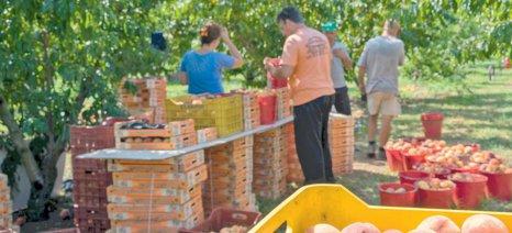 """Στην «τσιμπίδα» της εφορίας οι """"de minimis"""" ενισχύσεις – εξαίρεσή τους ως αποζημιώσεις ζητούν οι αγρότες"""